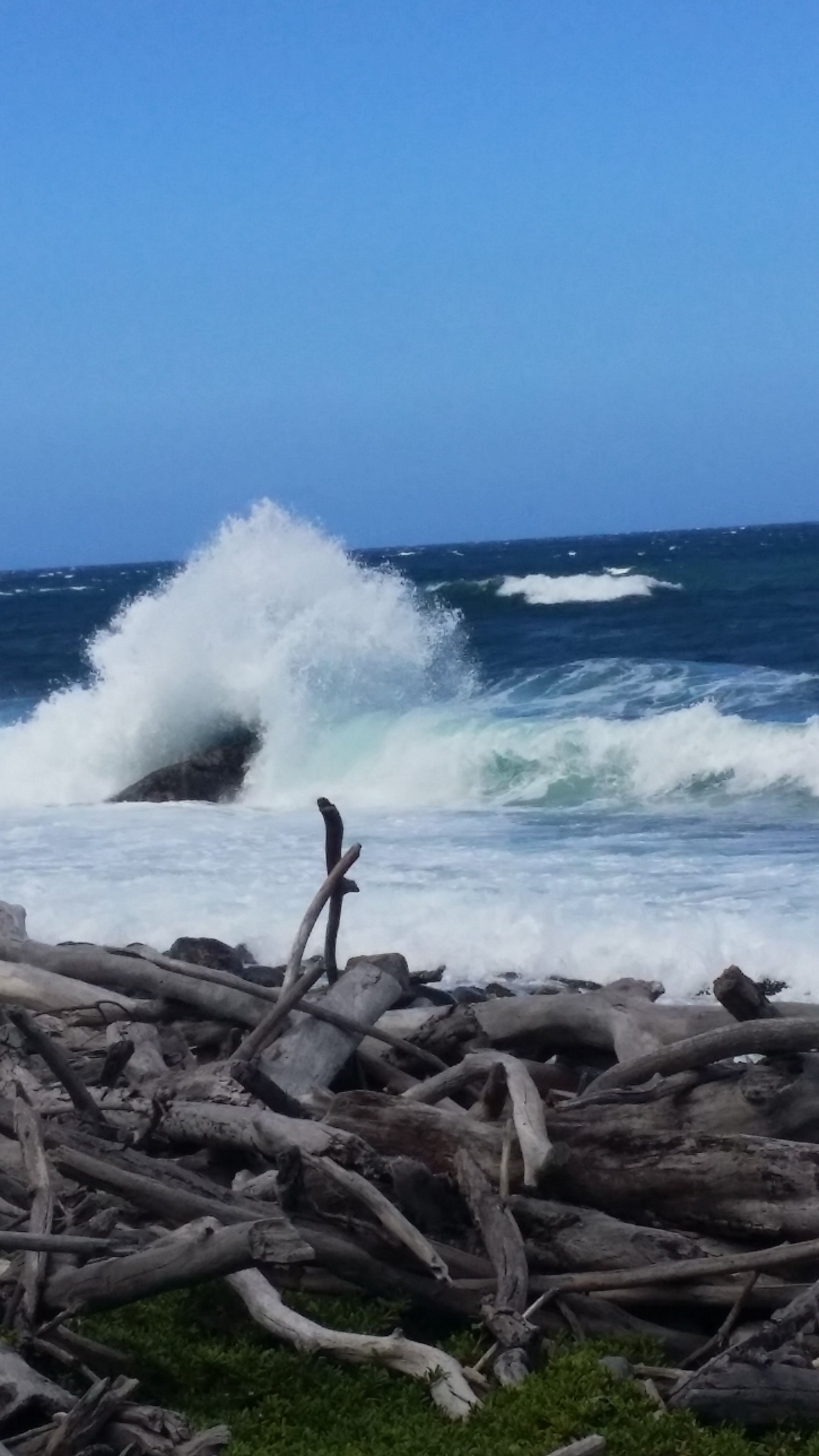 waves and drift wood